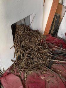 chimney clean birdsnest 1 Clean and sweep - Chimney sweep based in Brighton/Saltdean